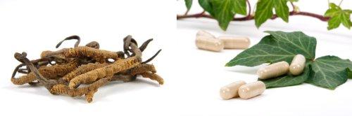 Asiatischer Raupenpilz Cordyceps sinensis CS-4 60 x 500mg Vegi-Kapseln
