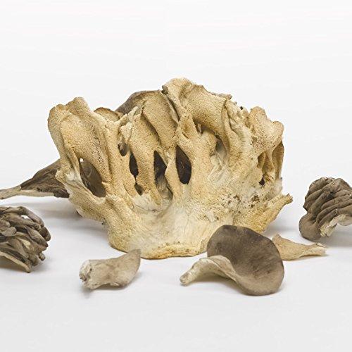 Bio Maitake Stücke getrocknet Bio 1000g von Pilze Wohlrab